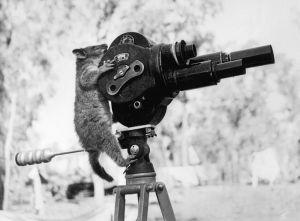 PossumMovieCamera1943WIKI