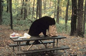 Black bear picnic table