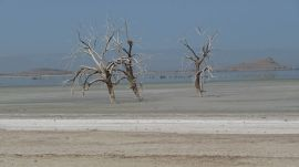 Salton Sea drowned trees WIKI