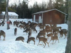 'Welcome to Deer-a-Thon 2013!  Come for the snacks; stay for the social networking.'