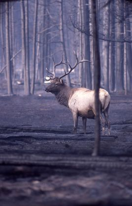 It doesn't take long for wildlife to return to a burned area.