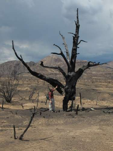 Massive forest fires can destroy all plant life, leaving nothing but bare ground.