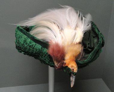 Bird hat WIKI