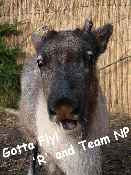 Reindeer_Wiki_Rangifer_tarandus AUTOGPH