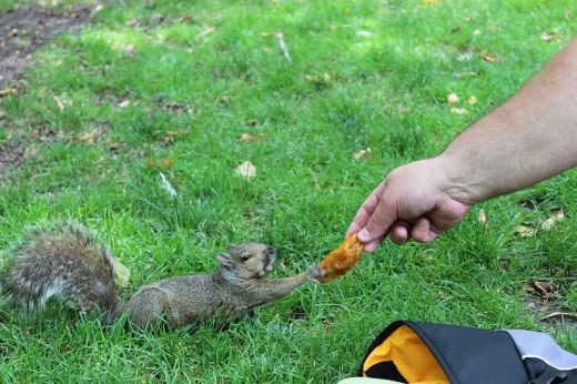 Squirrels probably don't need extra snacks, any more than we do.