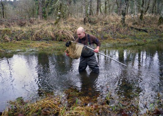 Oregon State Fish biologist Brian Bangs enthusiastically searches for chubb while wading in the shallow waters of a remote channel.  He's also thankful he didn't decide to be a piranha researcher.