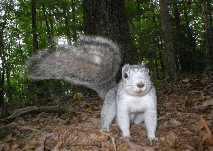 Squirrel selfie DDNF
