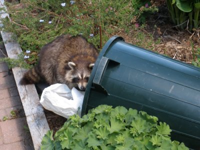 """""""Yes, this dumped garbage is definitely a public hazard. I'll dispose of it properly....IN MY TUMMY!"""""""