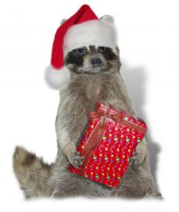 Christmas raccoon