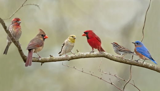 Five out of six native birds prefer native seed.  The sixth likes worms.