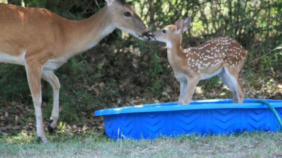 Although clearly told by her mother to 'Not move from where I left you', Fionna the Fawn couldn't help sneaking into the neighbors' pool.